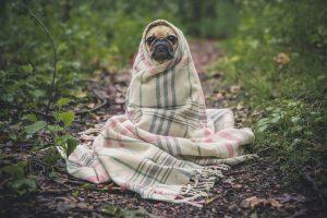 webcopywriter dog pic